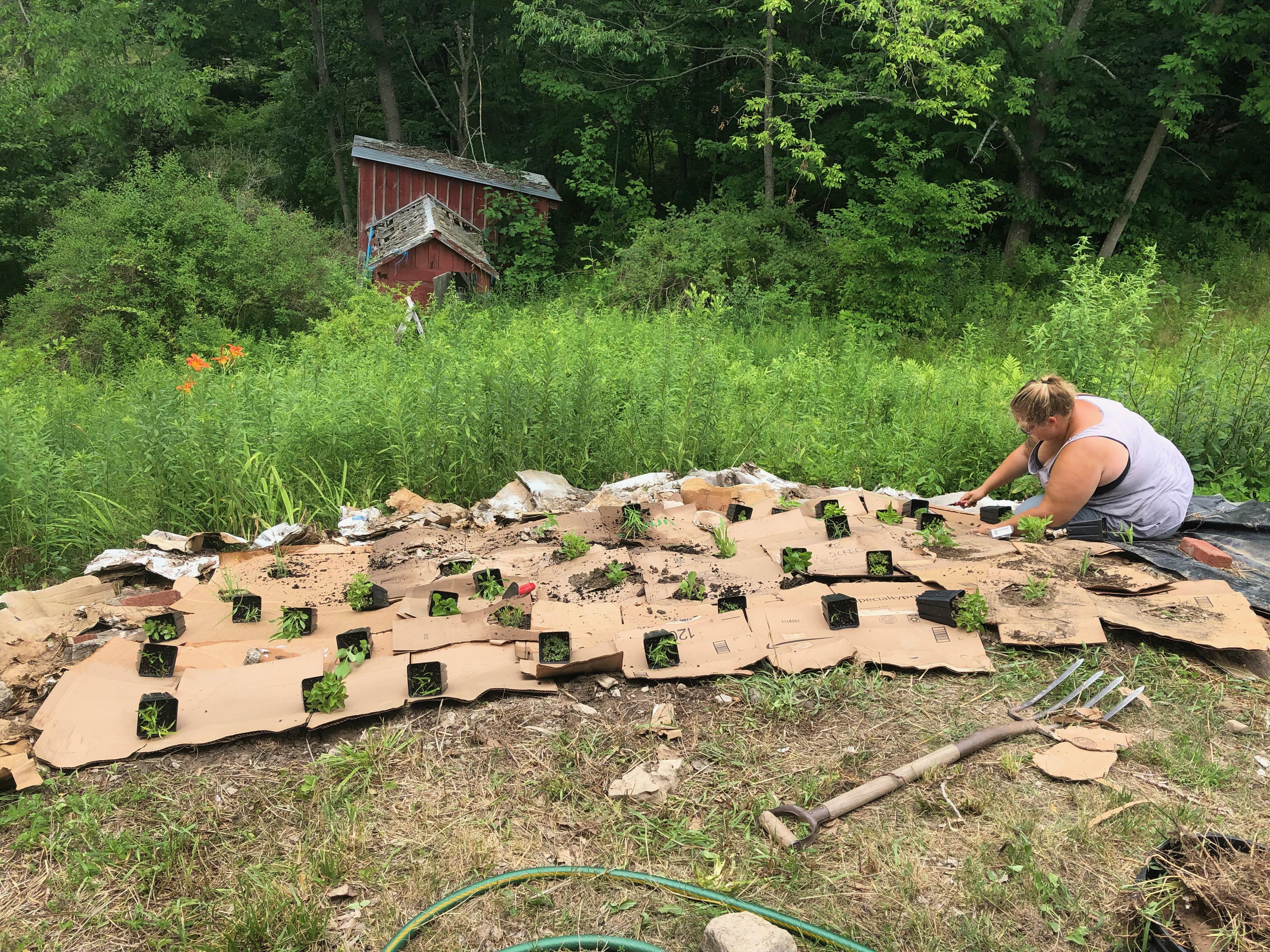 Ellen transplanting plants into holes in the cardboard