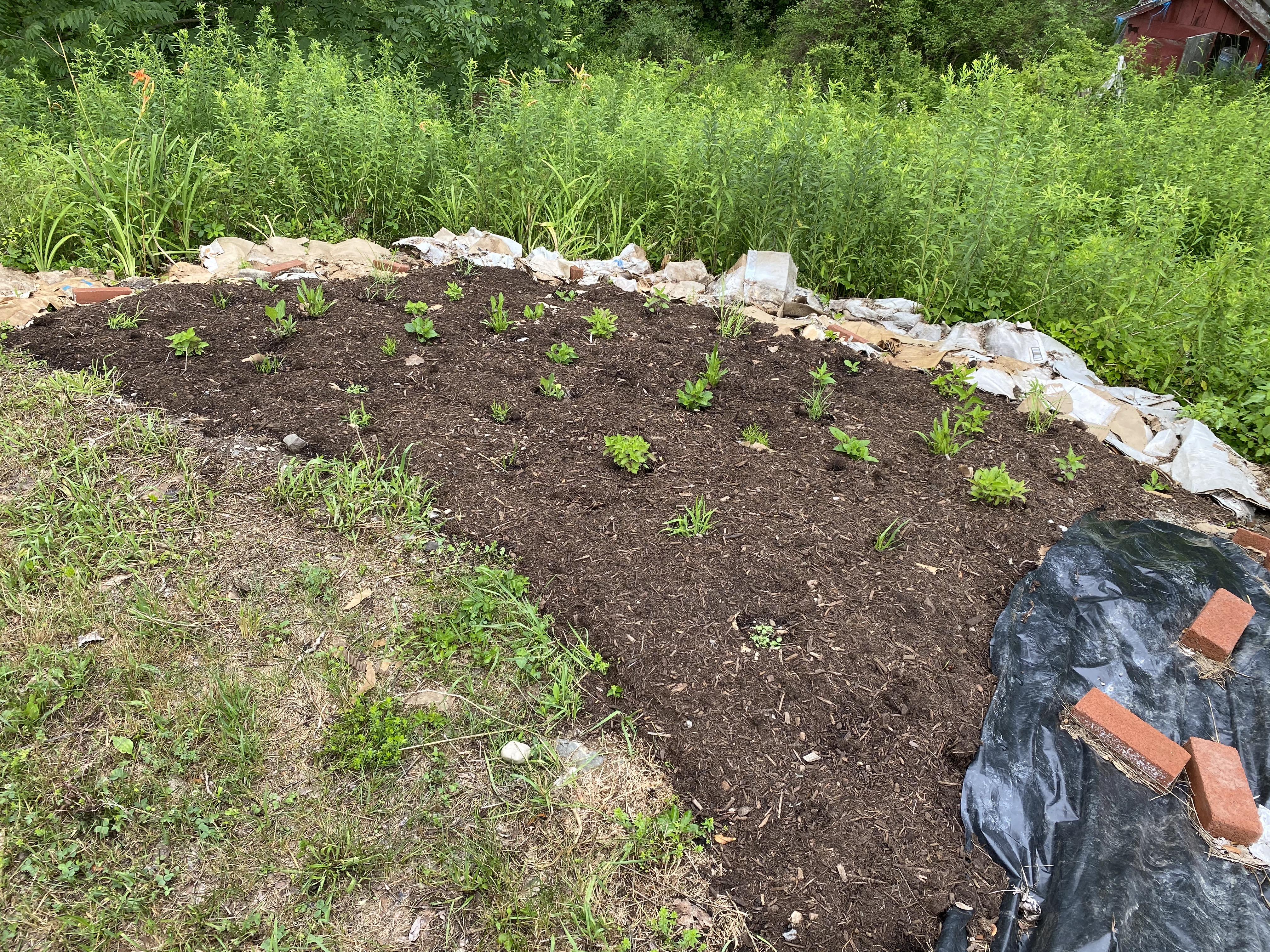 Freshly planted and mulched area of the garden