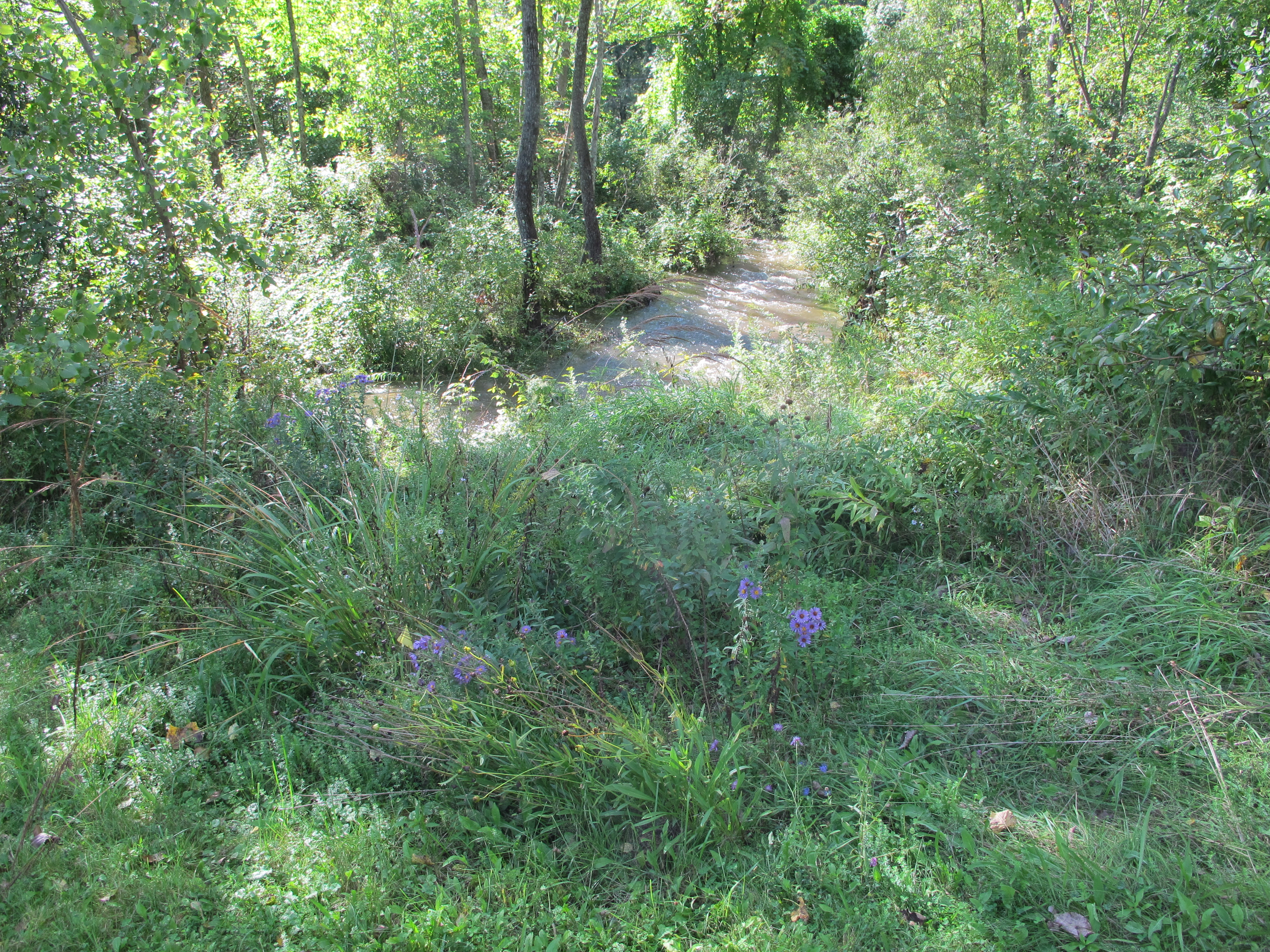 the garden bed by the creek filled with thriving plants a year later