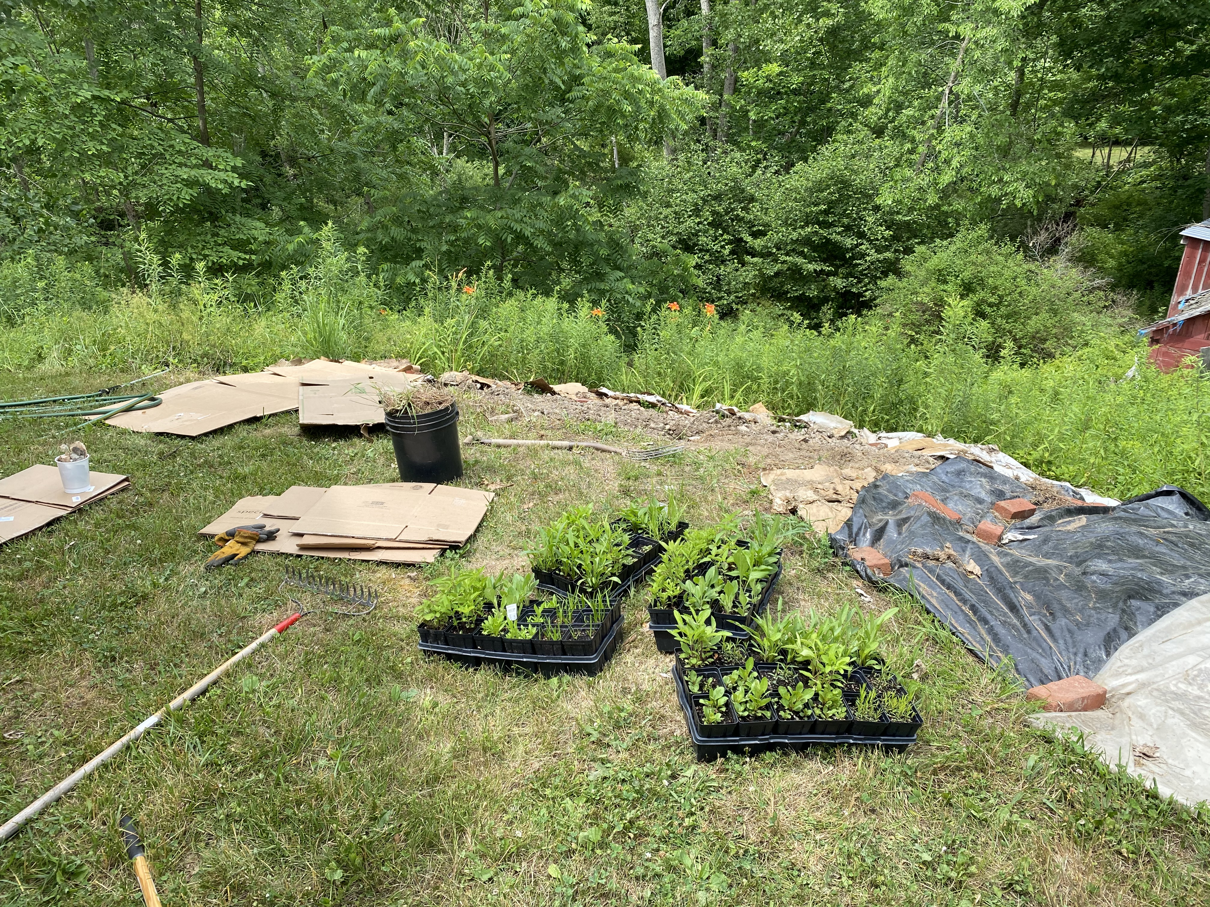 cardboard, trays of plants, and tools next to an in progress garden bed