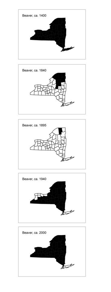 Beaver Distributions