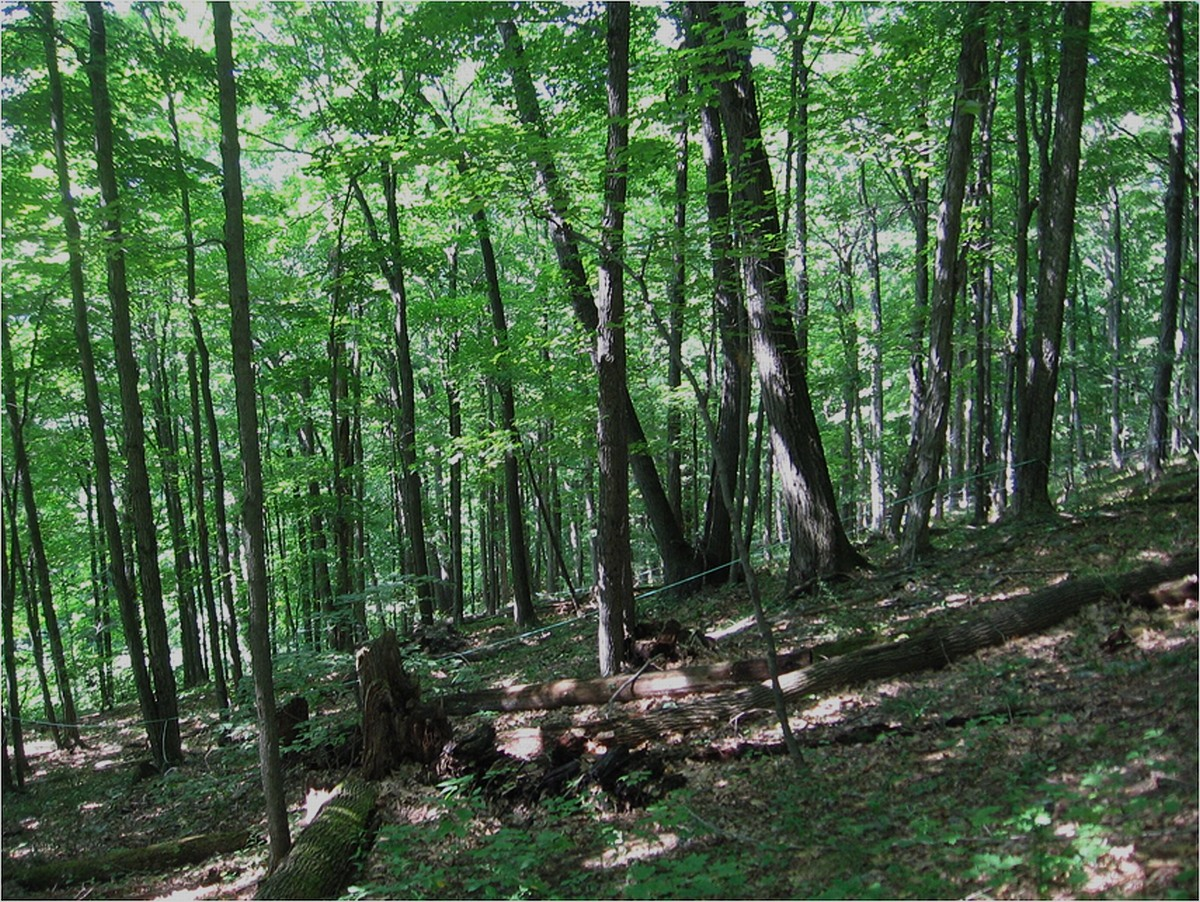Beech Maple Forest ~ Forests farmscape ecology program