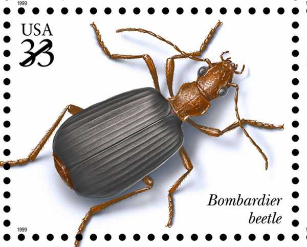 Bombardier Beetle Stamp