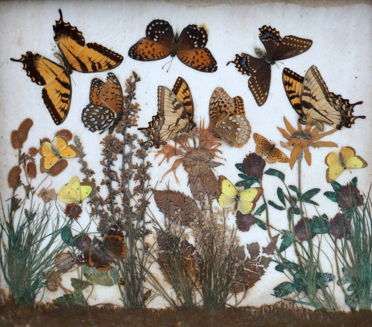 Butterfly Diorama