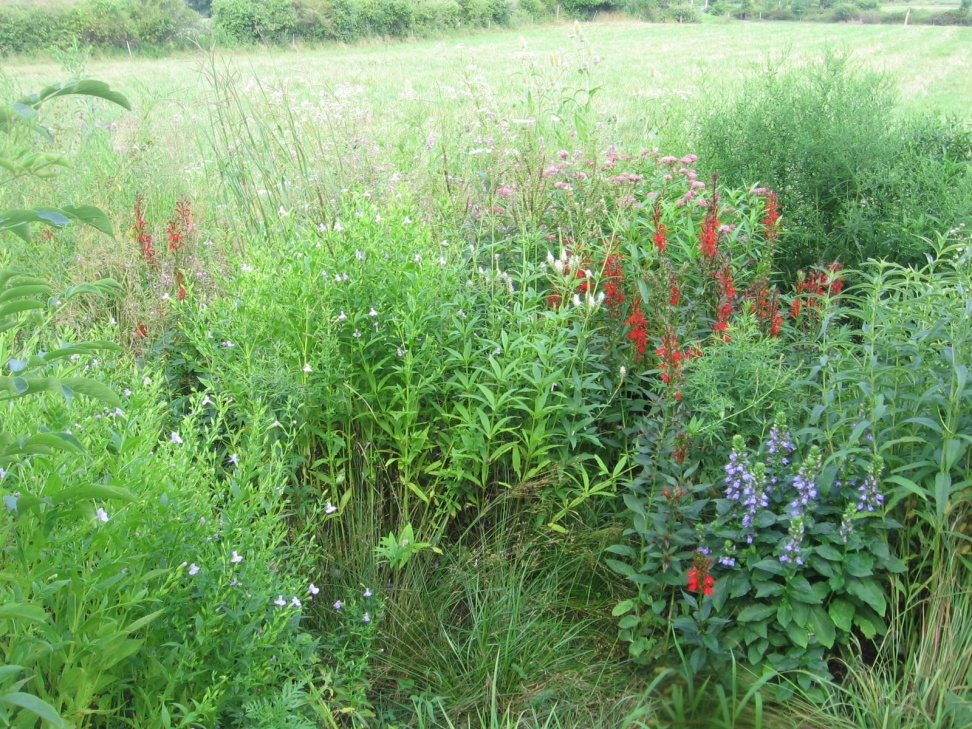 Native Plant Garden Farmscape Ecology Program