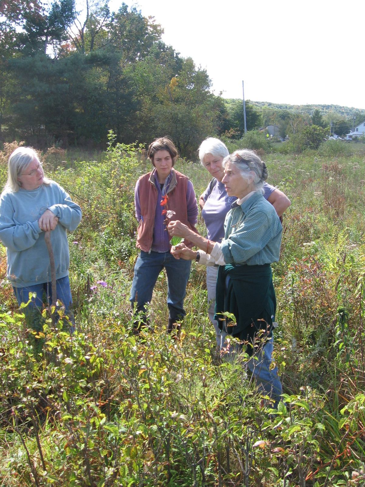 Collecting wild seeds from native plants