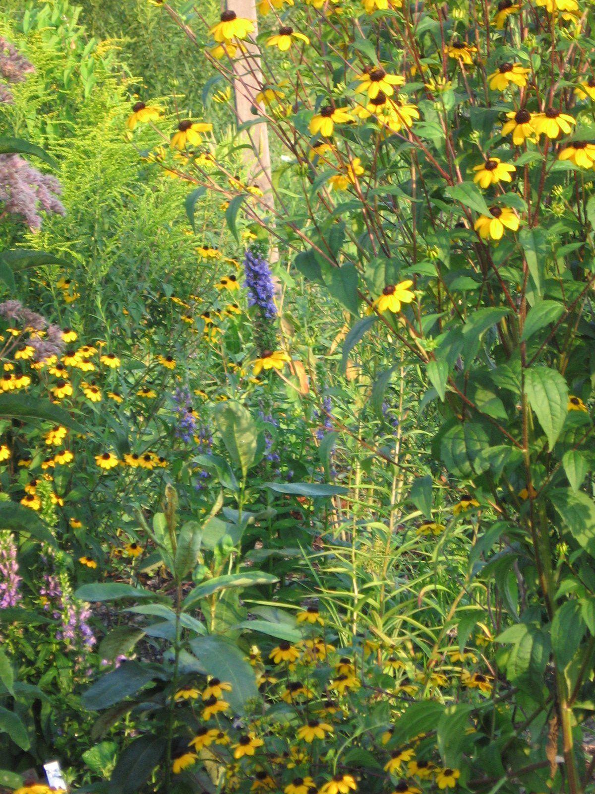 roadside garden full color
