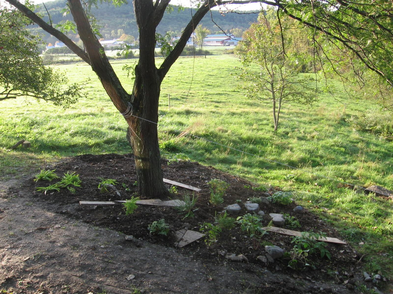 Shade Garden October 2011