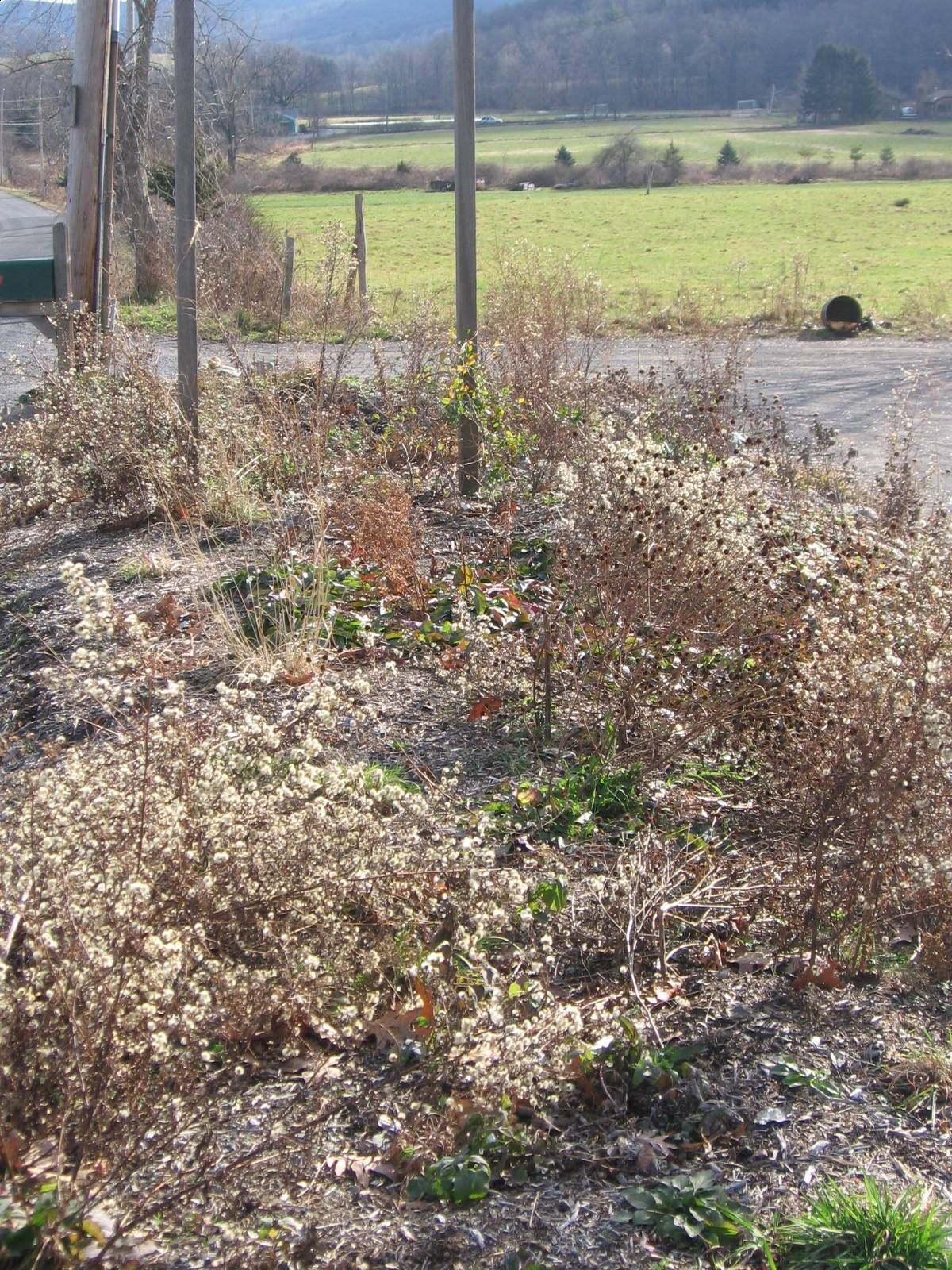roadside with asters in seed