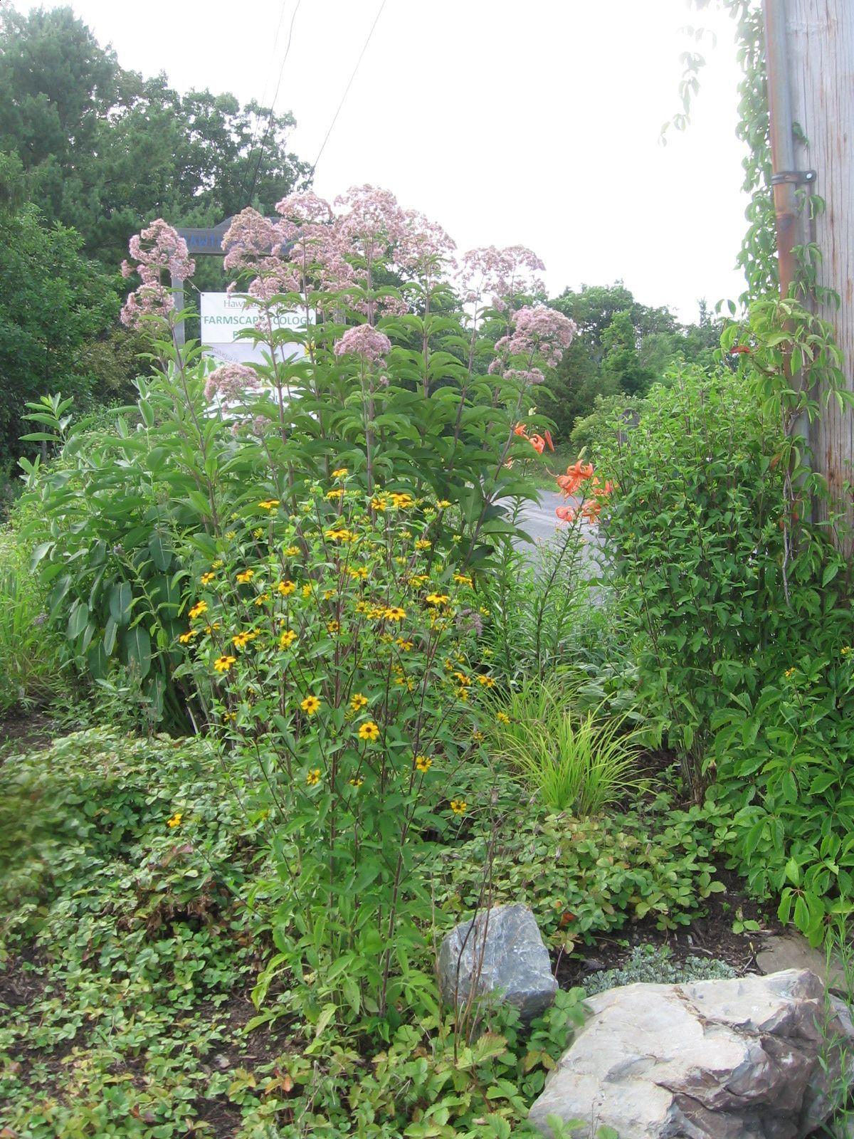 2012 roadside garden in flower