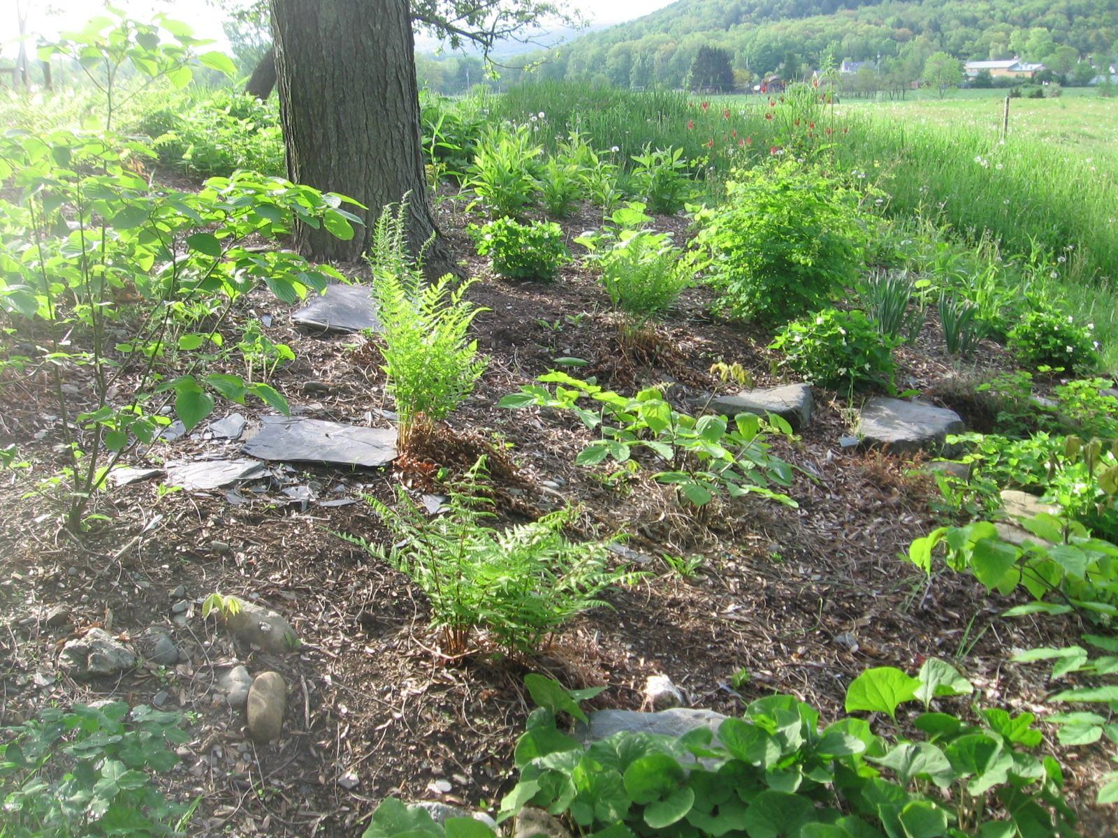 Shade Garden May 2013