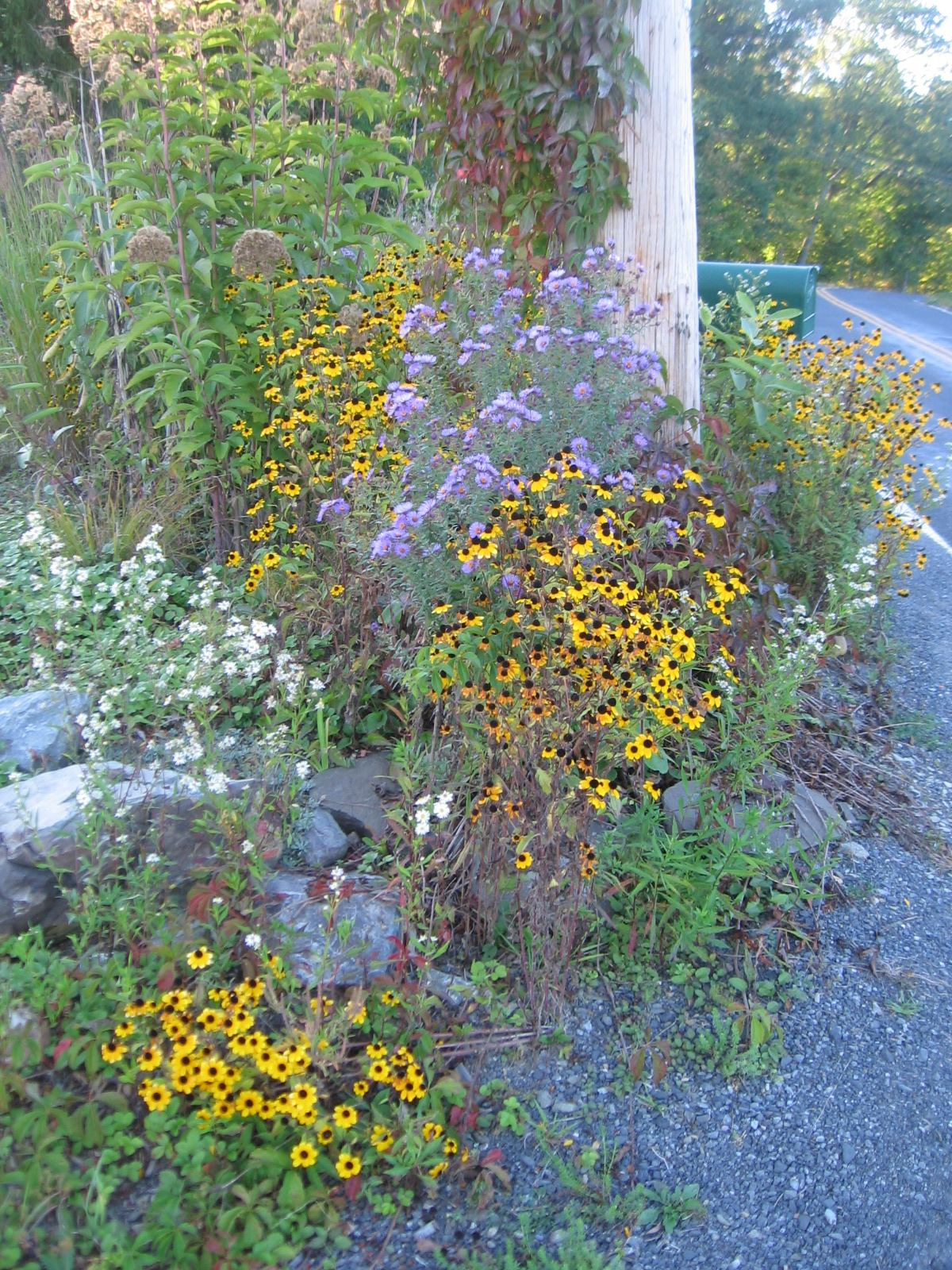Roadside Garden September 2013