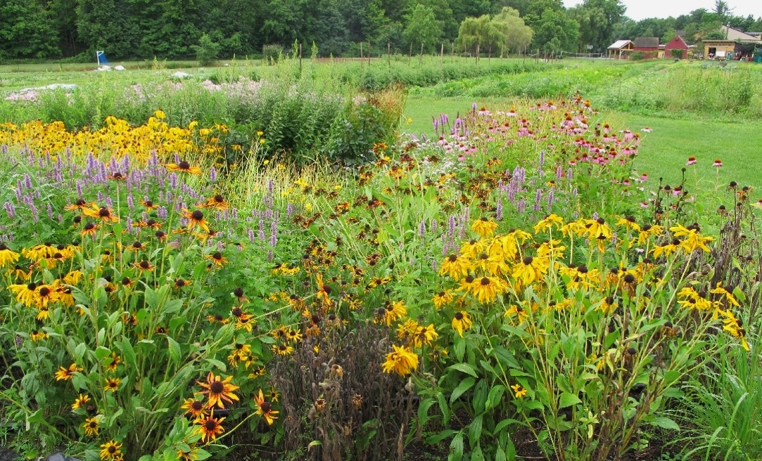 Pollinator Garden at Hawthorne Valley Farm