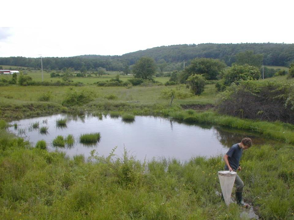 Manmade Ponds  Farmscape Ecology Program