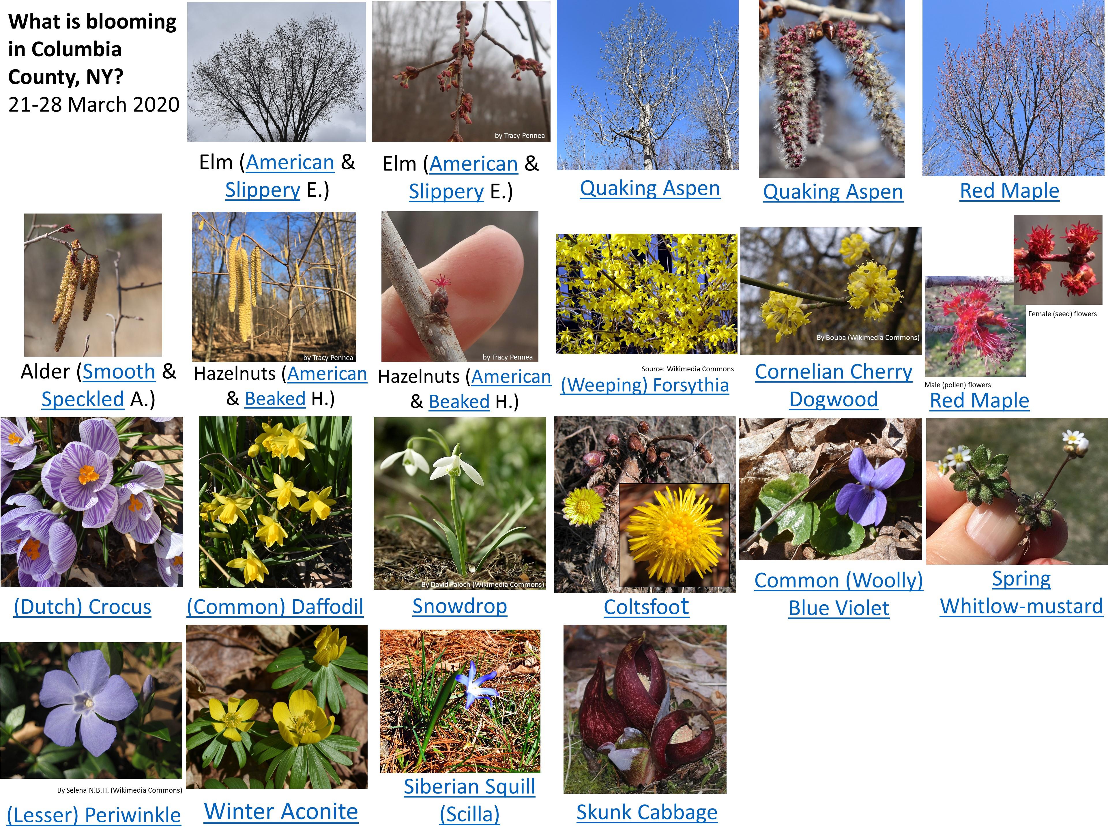 thumbnail of spring flower pdf